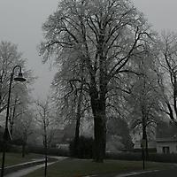 schwaney_winter_0003_20120814_1196192126