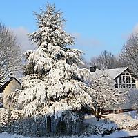 schwaney_winter_0006_20120814_1952181905