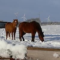 schwaney_winter_0007_20120814_1728687735