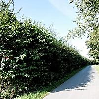 20120902_-_in_und_um_schwaney_21_20120908_1548278776