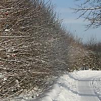 20101228_-_schwaney_-_winterspaziergang_12_20120826_1864277845