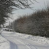 20101228_-_schwaney_-_winterspaziergang_14_20120826_1668750942