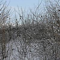 20101228_-_schwaney_-_winterspaziergang_17_20120826_1989606266