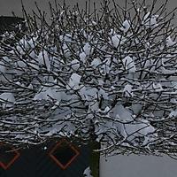 20101228_-_schwaney_-_winterspaziergang_1_20120826_1556591121