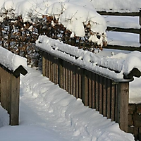 20101228_-_schwaney_-_winterspaziergang_22_20120826_1295390979