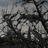 20101228_-_schwaney_-_winterspaziergang_3_20120826_1522576902