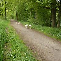 2012-05-06-Hermannshoehenweg-3-Teil-007