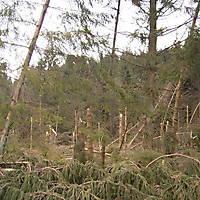 Kyrill-Bodental-2007-026