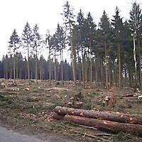 Kyrill-Emderwald-2007-053