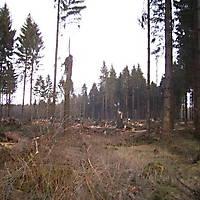 Kyrill-Emderwald-2007-055