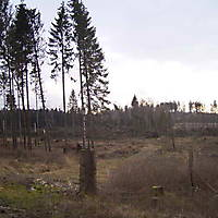 Kyrill-Emderwald-2007-057