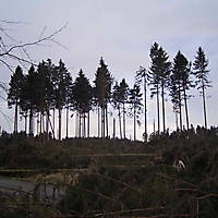 Kyrill-Emderwald-2007-069