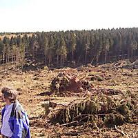 Foersterwanderung-22-04-07-024