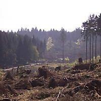 Foersterwanderung-22-04-07-025