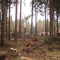 Sturm-Kyril-2007-006