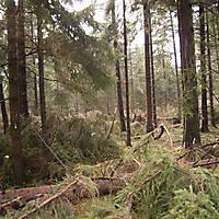 Sturm-Kyril-2007-008